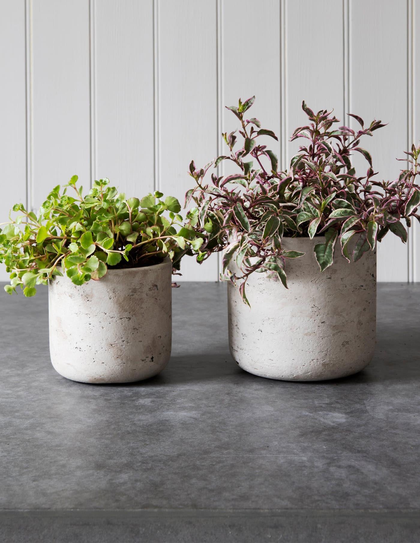 Cement Plant Pot, Two Sizes