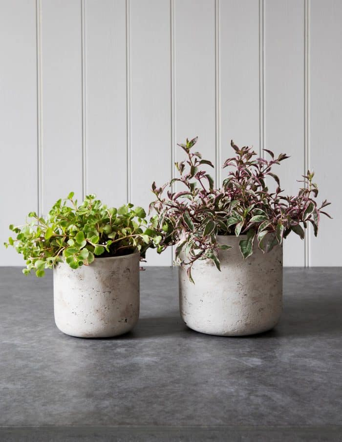 Concrete Plant Pots, Set of 2