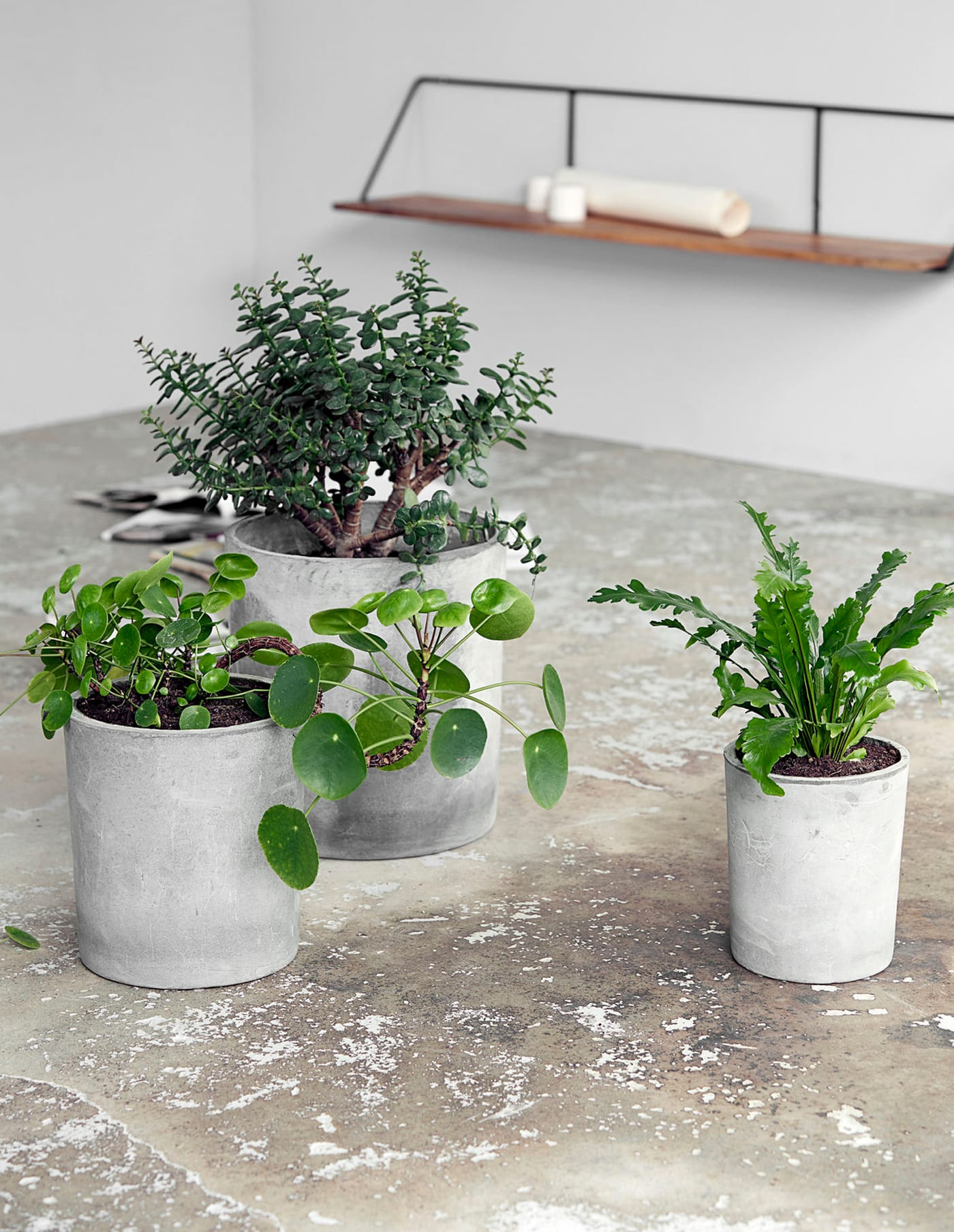 Large Concrete Planter, House Doctor